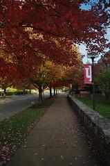Autumn at IU (StevenW.) Tags: autumn fall colors leaves sidewalk bloomington indianauniversity iu monroecounty schoolofjournalism