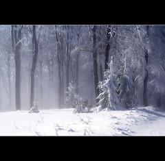 Winter (motivsucher) Tags: schnee winter snow cold hoarfrost kalt raureif niedersfeld