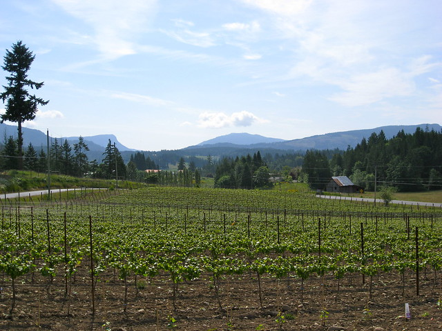 Saison Market Vineyard