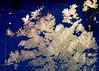 Ice flower (sakarip) Tags: sakarip iceflower winter window ice frost jääkukka eisblumen frostflower