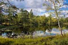 Pond Dream (Kristian ~) Tags: nature water norway pond scenery nittedal blueribbonwinner lillomarka mywinners theunforgettablepictures tup2 lomtjern