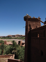 Nest (Carlitos) Tags: africa morocco maroc marruecos ksar kasbah  atbenhaddou soussmassadra  almarib  athbenhadu