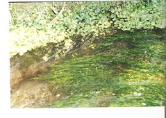 (golondriname) Tags: paseo cerro verdes agüita pelitos quilpué saltacaro