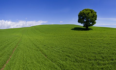 Another Mile (wentloog) Tags: uk sky panorama tree green field wales canon eos interestingness gallery britain farm cymru cardiff explore caerdydd 5d agriculture wfc ptgui canoneos5d 100400 wentloog pantools welshflickrcymru stevegarrington ef100400f45l