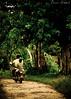 Na estrada (MIRANDA, Bruno) Tags: ilhadecotijuba brunomiranda