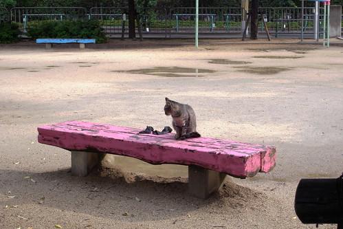 Today's Cat@20090611