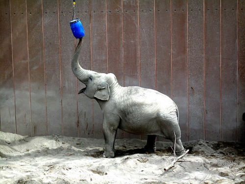 Elephantile