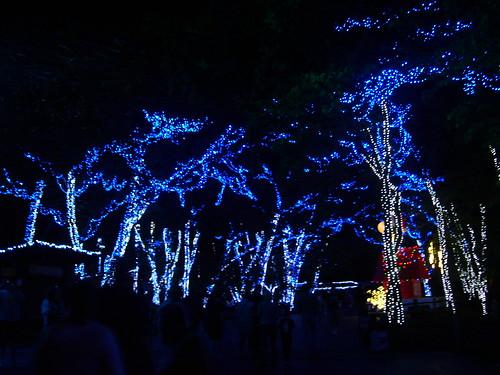 Cedar Point - Starlight Experience Winter