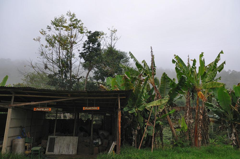 Pasteboard, Plastic, Banana Plant
