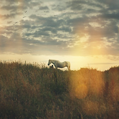 One (mister sullivan) Tags: light sunset horse field wales clouds one glow peace dusk country calm newport lone lonely leak guardian buttonmooon imstartingtobecomebewilderedbywildhorses mistersullivanportfolio michaelsullivanportfolio