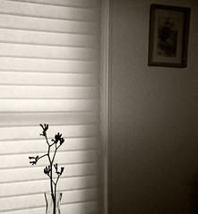 Vase & Shadows #2 (Sam_Sims) Tags: earlymorning inmyroom kangaroopaws nikond90