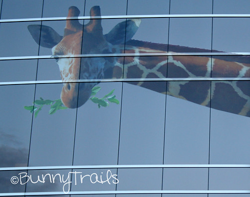 window giraffe 1