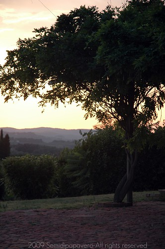 Albero tramonto