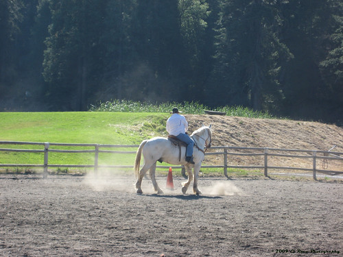 Horsing Around - or How I Spent my Summer Vacation