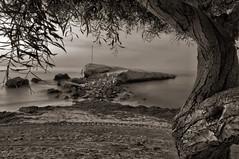 pichirichi B&N (ser-y-star) Tags: bw tree beach arbol rocks playa bn rocas terreros pichirichi