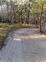 Tracks at Lake Kurwongba