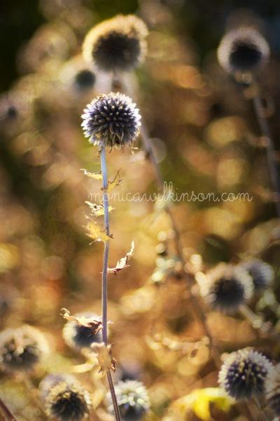lone flowerWEB