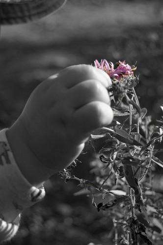 256b:365 Lucas's purple flower (take two)