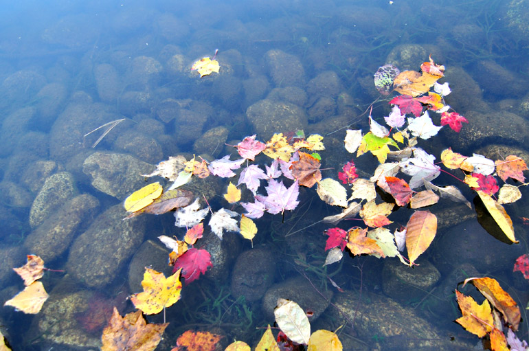 leaves_water_0003