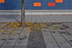 AUTM LVES (Heidelknips) Tags: school autumn tree leaves wall minimal schwetzingen d90 schulhof