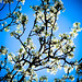 69/365: Spring Has Sprung