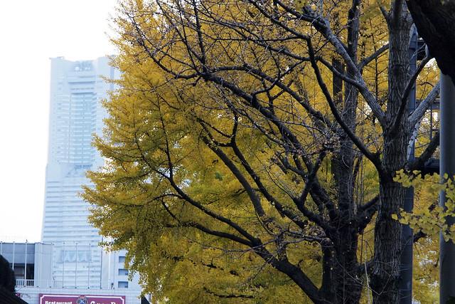 20101127_160346_横浜_山下公園