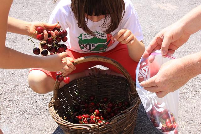cherries gloria2