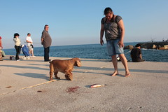 El nen, el peix, el gos (5) (ZenZer0Zer0) Tags: barcelona espaa pez cane fishing spain chica peces catalonia perro story catalunya nio pesca barcellona catalua spagna pesce catalogna espanya
