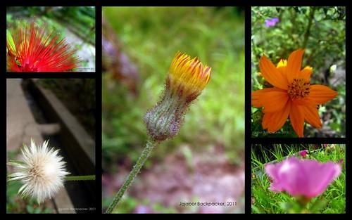 Wild Flowers Collage