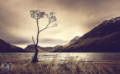 Buttermere Lone Tree (ianbrodie1) Tags: buttermere tree lone lake district shoreline reeds mountains hills peaks snow cold cloud clouds cloudy moody winter water pines branches