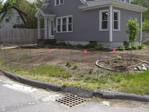 Planted Lawn