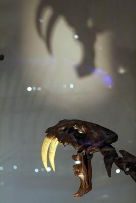 carnivorous mammals