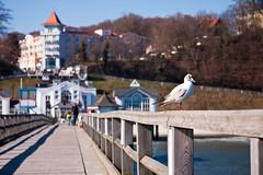 Auf der Seebrcke in Sellin (DerWusti) Tags: deutschland urlaub rgen ostsee deu frhling sellin mecklenburgvorpommern rgen ostseebadsellin frhling