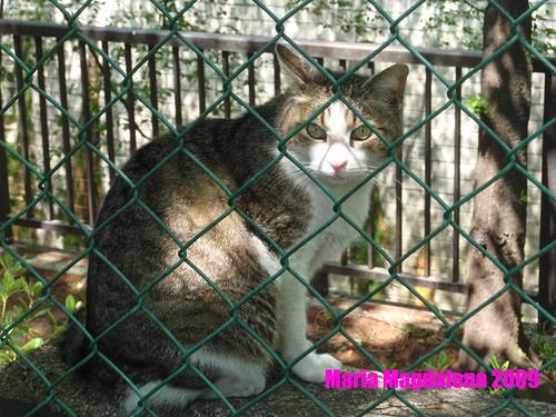 Cat20090522-3