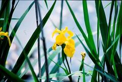 img.1 (davide9111) Tags: flower macrophotograph