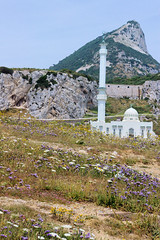 Gib Flowers and Mosque (cwgoodroe) Tags: gib gibraltar uk london england territory europe costa del sol gibralter policestation beer pint lighthouse bobby military instalation airtower airplane runway colorful angryfriar zanelampry zane 3sheets square europapoint fedra vesselcollision corgovesselsummer sun ocean wind beach castle mosque fishandchips moneky