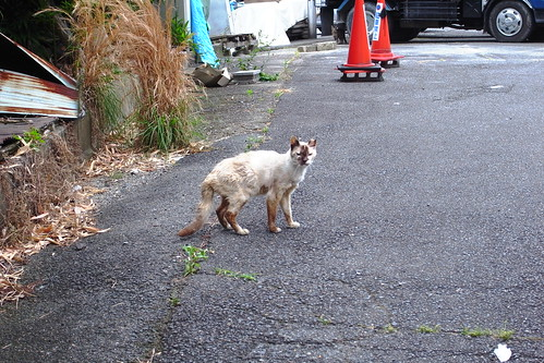 Today's Cat@20090609