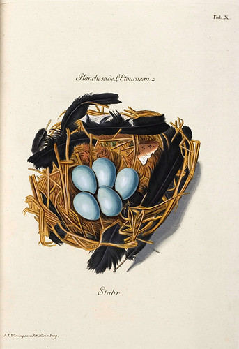 003-Nido de Estornino-Colección de nidos de aves 1772