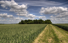 England: Northamptonshire - New Wheat (Tim Blessed) Tags: uk sky nature clouds landscapes countryside woods scenery wheat farming fields crops soe superaplus aplusphoto singlerawtonemapped