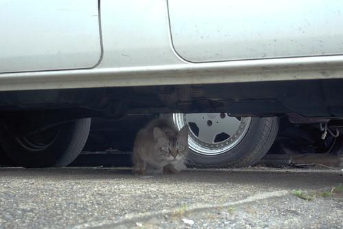 Today's Cat@20090705
