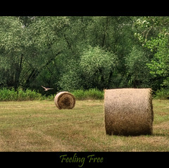 Feeling free (haikus*) Tags: field free predator hayrolls hdr worldwidelandscapes sailsevenseas