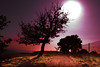 implosion (the_lighter) Tags: roma tree alberi nikon viola frascati controluce fav10 tuscolo flickraward platinumheartaward artofimages bestcapturesaoi