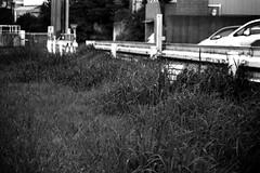 bench covered with grass (JapanDave) Tags: blackandwhite bw monochrome japan 日本 aichi okazaki 愛知県 岡崎市