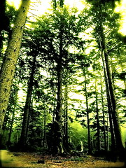 Oswald Forest (M-E-G-S) Tags: travel trees tree history nature oregon forest leaf scenery peace wildlife perspective photojournalism surfing westcoast oswald oswaldstatepark smallmoments the4elements abigfave anawesomeshot diamondclassphotographer spiritofphotography