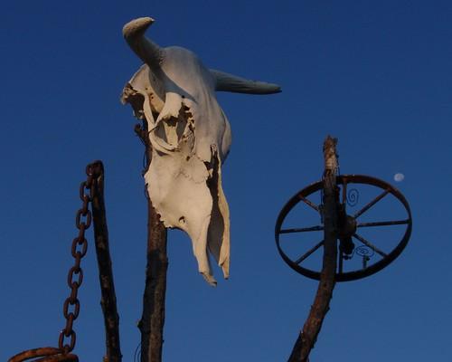 Cattle Skull 01