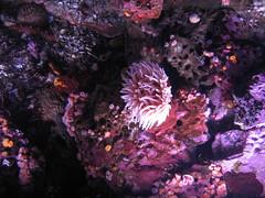 pic 129 (fpcM1) Tags: montereyaquarium carmelhwy1