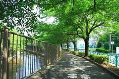 町田樹 画像46