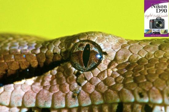Nikon D90 plus Nikkor 105mm VR macro photo of a boa constrictor, by J. Dennis Thomas