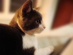 edited_DSC01508 (Erica_Anderson) Tags: cat kitten kitty geoffrey
