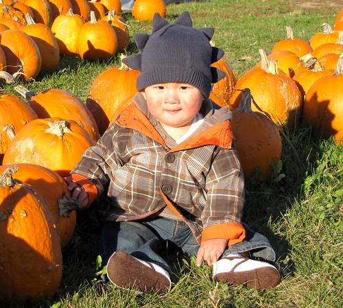 pumpkins 8
